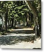 Tree Lined Promenade Metal Print