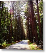 Tree Lined Road Metal Print by Crystal Joy Photography