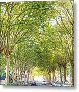 Tree-lined Street Metal Print