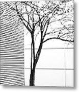 Tree Lines Metal Print by Darryl Dalton