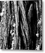 Tree Lines Metal Print