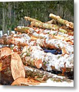 Tree Logs  Metal Print