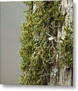 Tree Moss Closeup 2013 Metal Print