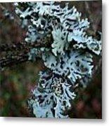Tree Moss Metal Print by Steven Valkenberg