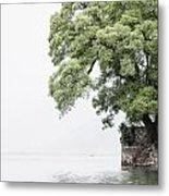 Tree Next To A Lake Metal Print