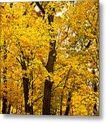 Tree Of Gold Metal Print