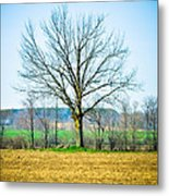 Tree Of Life Metal Print by BandC  Photography