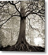Tree Of Life Metal Print by Dominique De Leeuw
