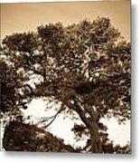Tree Of Life In Sepia Metal Print