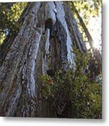 Tree Of Mystery #1 Metal Print