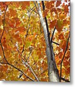Tree Of Orange Metal Print by Guy Ricketts
