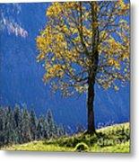 Tree Of Seasons Metal Print