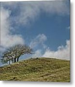 Tree On A Hill Metal Print