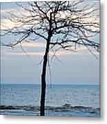 Tree On Beach Metal Print