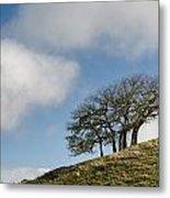 Tree On Hillside Metal Print