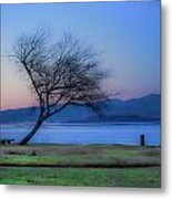 Tree On The Banks Of The River Clyde Metal Print