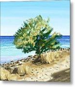 Tree On The Beach Metal Print