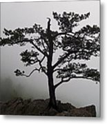Tree On The Blue Ridge Parkway Metal Print