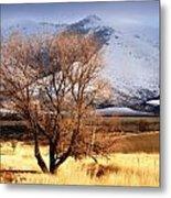 Tree On The Farm Metal Print