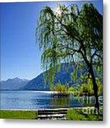 Tree On The Lakefront Metal Print