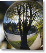 Tree On The Street Metal Print
