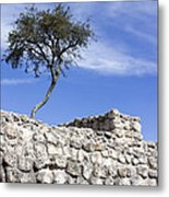 Tree On The Wall Metal Print