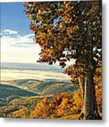 Tree Overlook Vista Landscape Metal Print