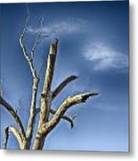 Tree Pointer Metal Print