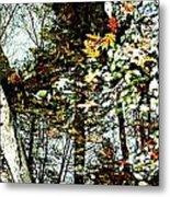 Tree Reflected In Leaves Metal Print
