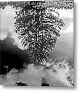 Tree Reflected  Metal Print