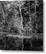 Tree Reflection In Chesapeake And Ohio Canal Metal Print