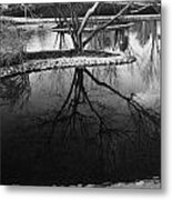 Tree Reflections On The Pond Metal Print