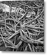 Tree Remains Metal Print by Charline Xia