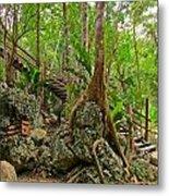 Tree Roots On Rock Metal Print