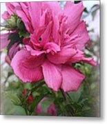 Tree Rose Of Sharon Metal Print