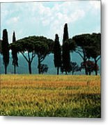 Tree Row In Tuscany Metal Print