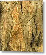 Tree Self Reflections In Bark Metal Print