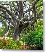 Tree Series 48 Metal Print