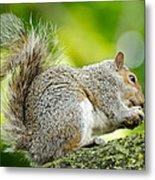 Tree Squirrel Metal Print