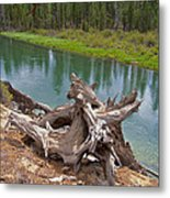 Tree Stump In Des Chutes Nf-or Metal Print
