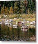 Tree Stumps At Clear Lake Metal Print