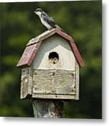 Tree Swallow With Young Metal Print