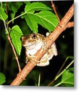 Tree Toad Night Metal Print by Tamara Stickler