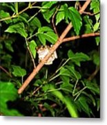 Tree Toad Metal Print