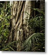 Tree Trunk And Ferns Metal Print