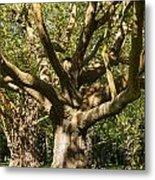 Tree Trunk And Limbs Metal Print