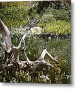Tree Trunk In The Meadow Metal Print