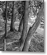 Tree Trunks Metal Print