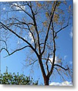 Tree Under Blue Sky Metal Print