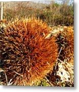 Tree Urchin Metal Print